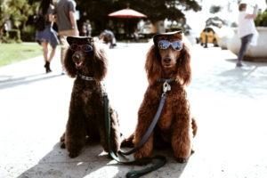 Dog Fundraising Costume Contest