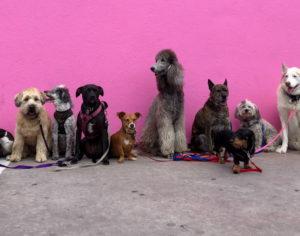 Dog Walk Fundraiser