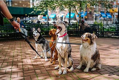 Dog Walk Fundraising Ideas