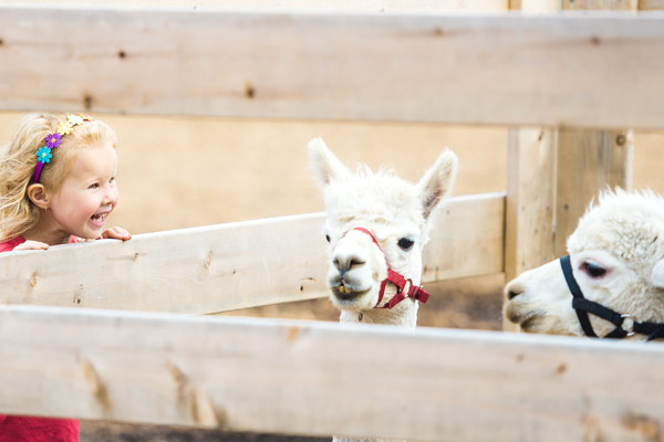 Zoo Walks are unique school fundraisers