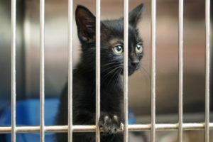 animal shelter kitty