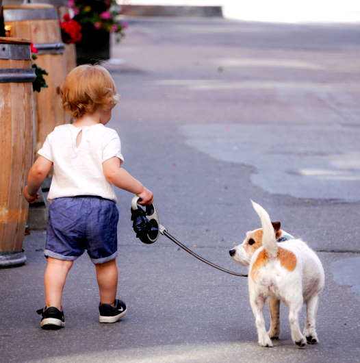 A Sponsored Dog Walk